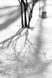 Headstone, Bush and Shadow
