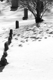 Row of Headstones, Bush and Shadow