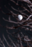 Moon through Branches