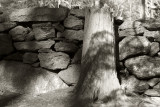 Stone Wall and Stump