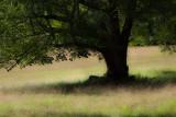 Tree Near Little Long Pond