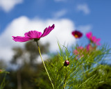 Cosmos and Sky #3