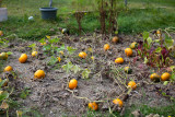 Little Pumpkin Patch
