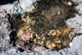 Leaf and Tidal Pool #1