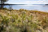 Fall Plants, Morgan Bay