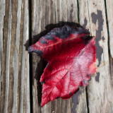 Red Leaf on the Deck