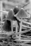 Fungus Group #1 Monochrome