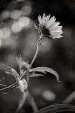 Little Sunflower from Below