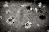 Cosmos in a Tunnel Monochrome