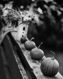 Still Life on Railing with Small Pumpkins, Vase of Little Sunflowers and Door Mat