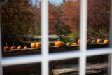 Railing Pumpkins Reflection