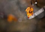 Last Orange Leaf by Brightly Lit twig