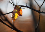 Red and Yellow Leaf and Branches