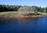 Three Trees Across Little Long Pond