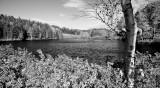 Little Long Pond Estuary, Autumn Monochrome