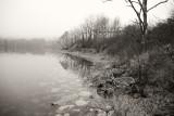 Foggy Bayside