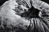 Snowy Gourd