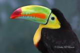 Keel-billed Toucan 09