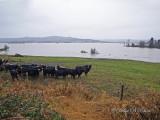 Snohomish Flood of 2009