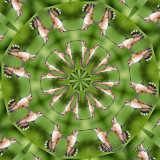 Kaleidoscope (second photo is the one used for kaleidoscope effect)