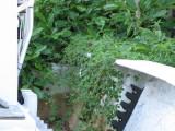 Boat  garden II.