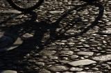 Shadows #5