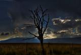 Dead tree #2.jpg