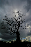 Dead tree under a stormy sky