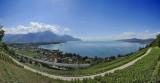 Lake Geneva Vineyards panorama