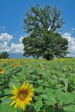 ...in the fields