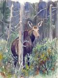 moose-SOLD.jpg