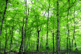 And Endlessly The Forest Ran, Green, All Encompassing & Full of Gentle Light
