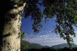 Branch view