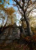Norwegian Wood 2
