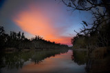 Edward River Cockatoo