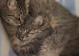 Tigger and Baby