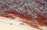 Bird On a Wire*