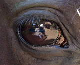 2nd Place (tie)Horse Eye Viewby Jim Thode