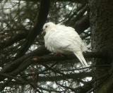 Wildlife/Song Birds