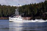 October Whales with the Quoddy Link