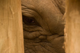 Eye of the orphan rhino