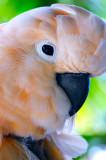 D3C_2243MauiBird1.jpg