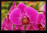 Orchidée 3