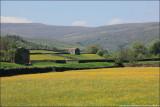 Wildflower meadows of Swaledale