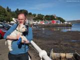 Pooch at Tobermory, Isle of Mull, Scotland