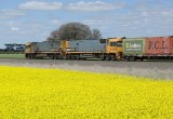 NR's and Canola