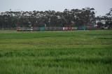 Lush Green Crops