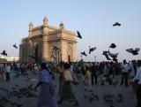 Pigeons Gateway to India.jpg