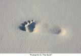 004  Footprint In The Sand.jpg