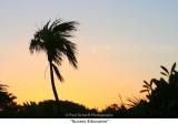 017  Sunset Sihouette.jpg